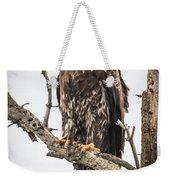 Perched Juvenile Eagle Weekender Tote Bag