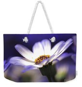 Pericallis On A Cool Spring Evening Weekender Tote Bag