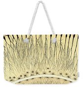 Pes Hipocampi Major Santiago Ramon Y Cajal Weekender Tote Bag