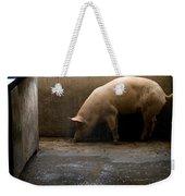Pigs At A Hog Farm In Kansas Weekender Tote Bag