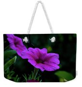 Pink Petunia, Dusk, Hunter Hill, Hagerstown, Maryland, July 25,  Weekender Tote Bag