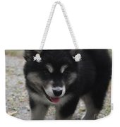 Playful Alusky Puppy Dog Ready To Pounce Weekender Tote Bag
