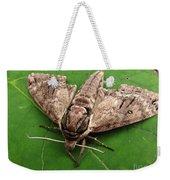 Plebeian Sphinx Moth Weekender Tote Bag