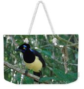Plush-crested Jay   Cyanocorax Chrysops Weekender Tote Bag