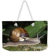 Pneumostome Of A Burgundy Snail Weekender Tote Bag