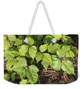 Poison Oak Vine - Toxicodendron Weekender Tote Bag