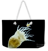 Polyp Of A. Aurita Jellyfish, Lm Weekender Tote Bag