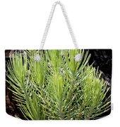 Ponderosa Pine 5 Weekender Tote Bag