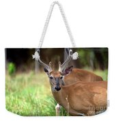 Portrait Of A Beautiful Buck  Weekender Tote Bag