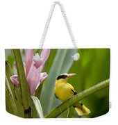 Portrait Of A Black-naped Oriole Weekender Tote Bag