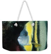 Portrait Of A Cortez Angelfish Weekender Tote Bag