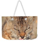 Portrait Of A Young Bob Cat 02 Weekender Tote Bag