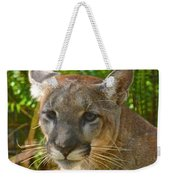 Portrait Of A Young Florida Panther Weekender Tote Bag