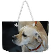 Portuguese Pointer Dog On A Leash Weekender Tote Bag