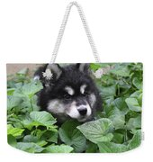 Precious Fluffy Alusky Puppy Dog In Green Foliage Weekender Tote Bag