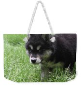 Precious Puppy With Lots Of Fluffy Fur  Weekender Tote Bag