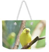 Precious Yellow Budgie Parakeeet In The Wild Weekender Tote Bag