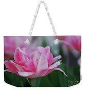 Pretty Candy Striped Pale Pink Tulip In Bloom Weekender Tote Bag