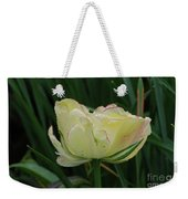 Pretty Cream Colored Tulip Edged In Red With Dew Weekender Tote Bag