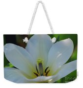Pretty Perfect White Tulip Flower Blossom In The Spring Weekender Tote Bag
