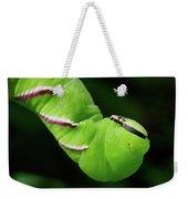 Privet Hawk Moth Caterpillar Weekender Tote Bag