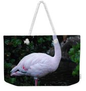 Profile Of A Pink Lesser Flamingo Weekender Tote Bag