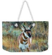 Pronghorn Antelope Amid Fall Foliage Wyoming Weekender Tote Bag