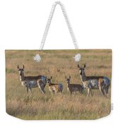 Pronghorn Fawns And Their Mothers Weekender Tote Bag