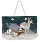 Pronghorn Feeding Weekender Tote Bag