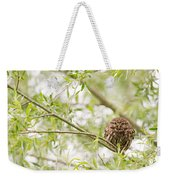 Puffed Up Little Owl In A Willow Tree Weekender Tote Bag