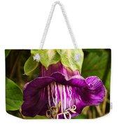 Purple Flower Of The Vine Known As Cathedral Bells Weekender Tote Bag