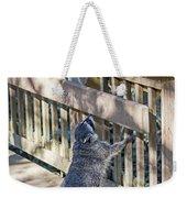 Raccoon Shenanigans Weekender Tote Bag
