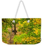 Racoon In Fall Trees Weekender Tote Bag
