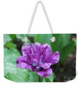 Raindrops Clinging To The Purple Petals Of A Tulip Weekender Tote Bag