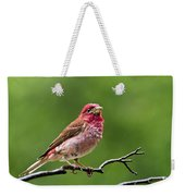 Rainy Day Bird - Purple Finch Weekender Tote Bag by Christina Rollo