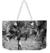 Rare Palm Trees Curacao Weekender Tote Bag