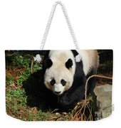 Really Sweet Giant Panda Bear Waddling Around Weekender Tote Bag