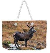 Red Deer Stag In Autumn Weekender Tote Bag