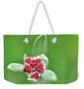 Red Everlasting At Amatzia Forest -1 Weekender Tote Bag