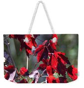 Red Fall Leaves In The Sun Weekender Tote Bag