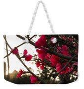Red Flowers At Sunset Weekender Tote Bag