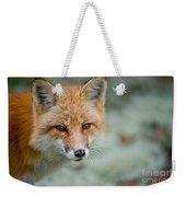 Red Fox Pictures 146 Weekender Tote Bag