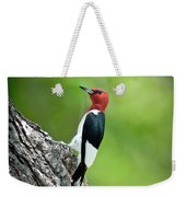 Red Headed Woodpecker Portrait Photograph By Robert Frederick