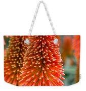 Red-hot Poker Flower Kniphofia Weekender Tote Bag
