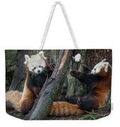 Red Panda Cubs At Play Weekender Tote Bag