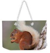 Red Squirrel On Tree Weekender Tote Bag