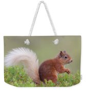 Red Squirrel Pauses Weekender Tote Bag