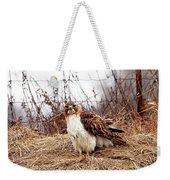 Red Tailed Hawk In The Field Weekender Tote Bag