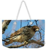 Redtail Among Branches Weekender Tote Bag