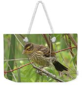 Redwing Blackbird - Immature Weekender Tote Bag